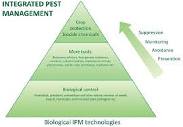 Integrated Pest Management Plan